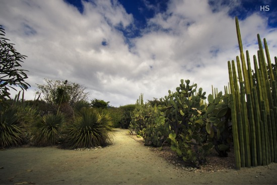 Jard n etnobot nico oaxaca lejos hs fotograf a for Jardin etnobotanico oaxaca
